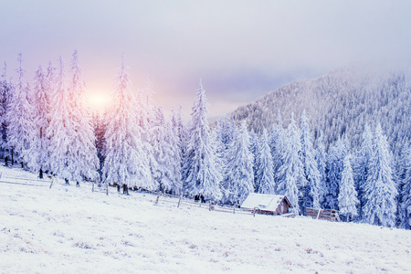 Cabin in the mountains in winter. Ukraine