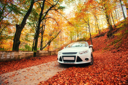forest path: car on a forest path. Landscape. Ukraine. Europe Stock Photo