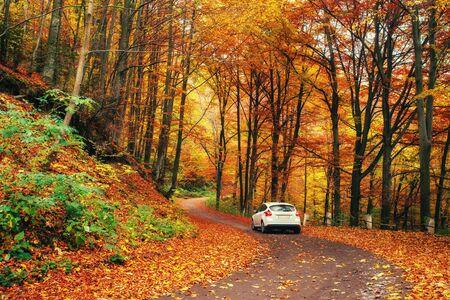 forest path: car on a forest path. Autumn Landscape. Ukraine. Europe