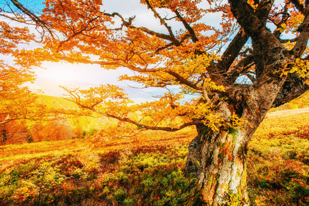 Huge stone in the forest area. Fantastic sunny day in autumn forest. Autumn Landscape. Ukraine, Europe Stock Photo