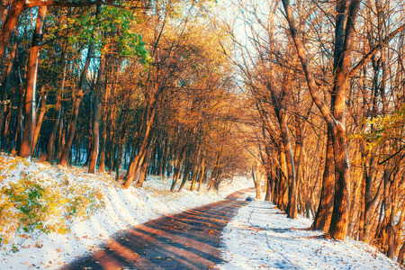 First snow in the forest. Beauty world Road