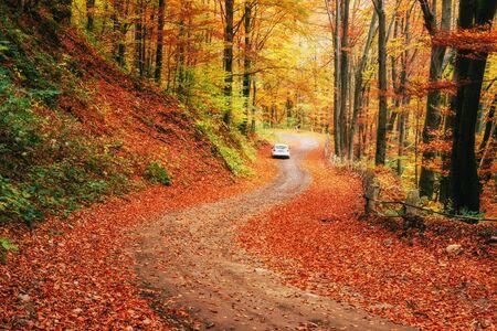 forest path: Car on a forest path. Carpathians Ukraine Europe