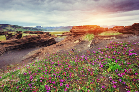 volcanic rocks in Iceland. Sunset. Beauty world. Stock Photo