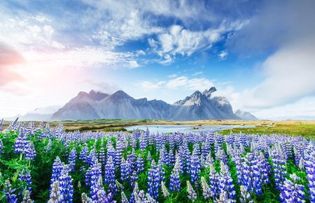 美しい風景林とアイスランドの山です。 写真素材