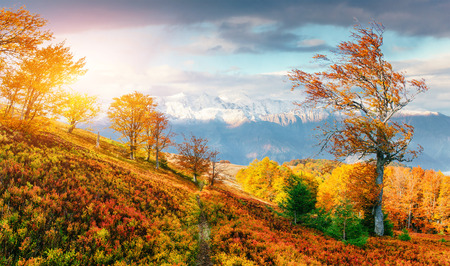 mountain range in the Carpathian Mountains in the autumn season. 版權商用圖片