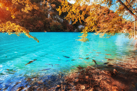 view of blue fish in the lake. Plitvice Lakes Nationa
