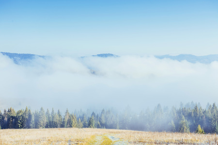 Winter landscape glowing by sunlight. Dramatic scene. Scenic fog
