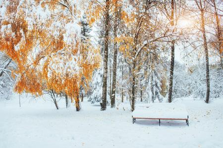 Besneeuwde bomen met herfstbladeren en banken in de stad pa