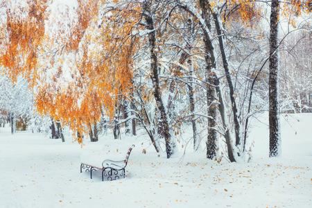 Besneeuwde bomen met herfstbladeren en bankjes in de stad pa