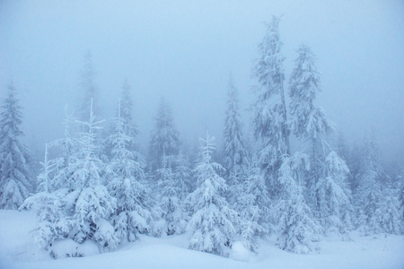 Dense fog in the mountains. Dramatic scene. Magical winter snow