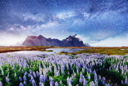 covered fields: The picturesque landscapes of forests and mountains  Iceland.