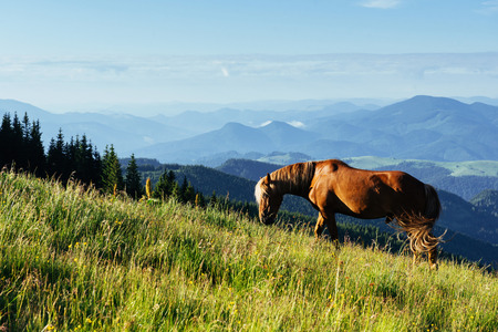 The herd of horses in the mountains in fantastic sunny summer day