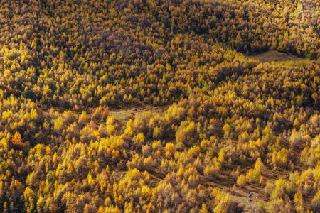 ジョージア州のロッキー山脈の間の幻想的な黄金の秋風景。Malvnychi 雪をかぶった山。ヨーロッパ 写真素材