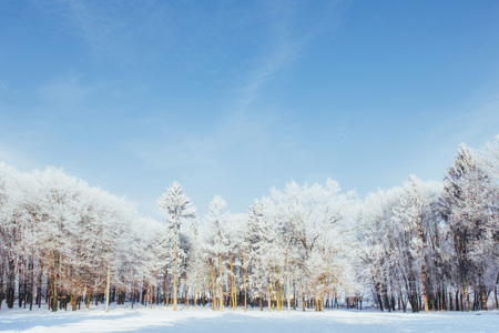 The tops of the trees in the snow. Frozen snow on trees. Frozen trees on a background of blue cloudy sky.
