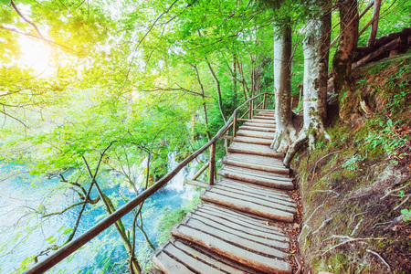 Wooden laying on blue water. Plitvice lakes, Croatia