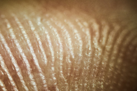 인간 피부의 패턴을 가까이에서 봐라. 스톡 콘텐츠 - 85392341