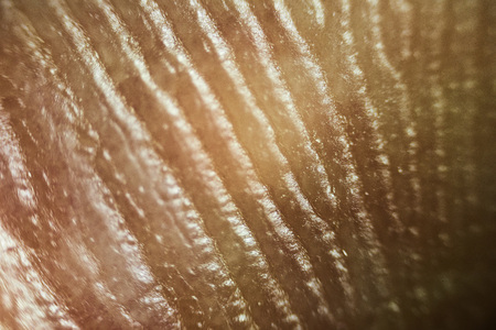 Close up look at the patterns of human skin