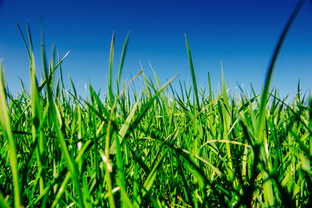 Close up of fresh thick grass
