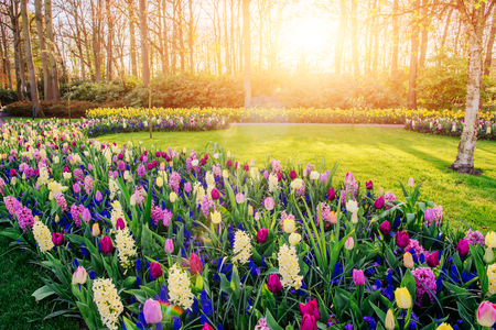 prachtige veelkleurige hyacinten. Holland. Keukenhof Flower Park.