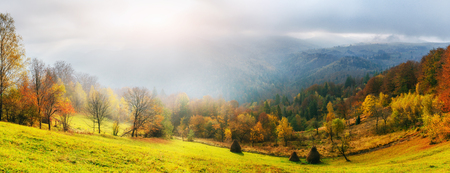 Fantastic forest in Carpathian Ukraine. There comes a golden autumn in the valleys. Фото со стока