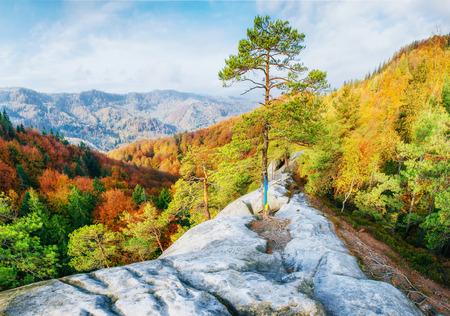 Walking in rocky terrain in the forest. Carpathian, Ukraine
