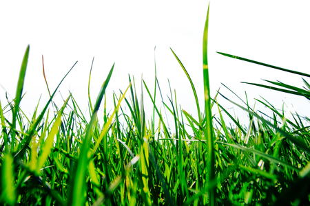 Bright spring green grass in the sun Imagens