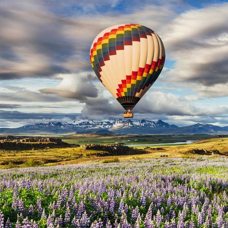 아이슬란드의 숲과 산의 그림 같은 풍경. 야생 블루 루핀 여름에 피입니다. 아름 다운 필드 위에 아름 다운 풍선입니다.