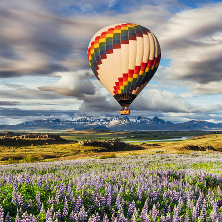 The picturesque landscapes of forests and mountains of Iceland. Wild blue lupine blooming in in summer. Beautiful balloon over the picturesque fields.