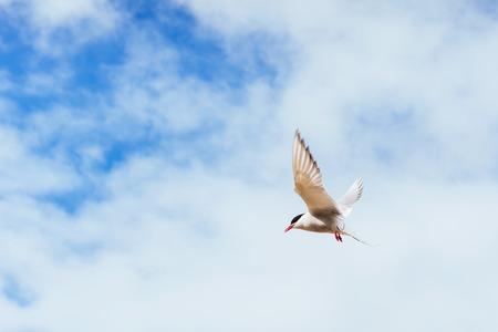 Belle sterne polaire sur un fond de beau ciel bleu avec des nuages ? ? cumulus Banque d'images - 85969983