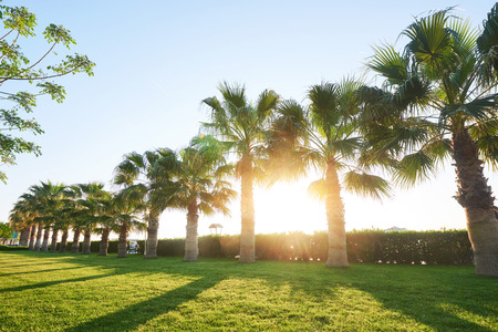 Green palm park and their shadows on the grass. Stock Photo