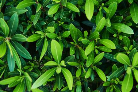 春の緑の植物の枝。トルコ
