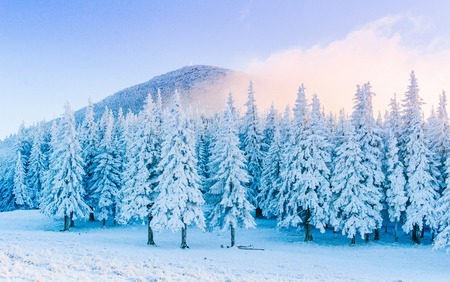 Mysterious winter landscape majestic mountains in winter. Magical snow covered tree. In anticipation of the holiday. Dramatic wintry scene. Carpathian. Ukraine. Happy New Year.