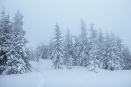 Fantastic winter landscape. On the eve of the holiday. The dramatic scene. Carpathian, Ukraine, Europe. Happy New Year.