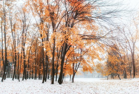 October mountain beech forest with first winter snow Stock Photo - 86370379