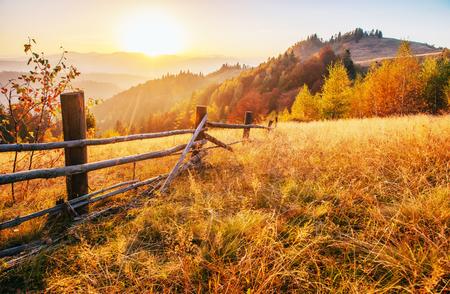 birch forest in sunny afternoon while autumn season. Autumn Landscape. Ukraine. Europe