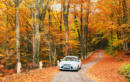 White car on a forest trail. Golden autumn Stock Photo