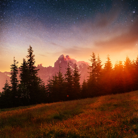 Fantastic starry sky and the milky way above the pinnacles of the pines Stock Photo