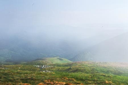 山の中の美しい場所にシャクナゲ咲く。山の花。日当たりの良い夏の日に山に咲くシャクナゲ。劇的な珍しいシーン。カルパチア、ウクライナ 写真素材