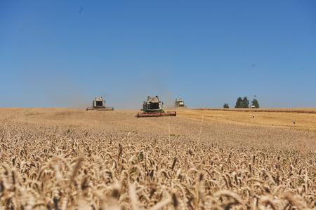 TERNOPIL - 20 luglio: alcuni combina un'andana nel mezzo di un campo di grano durante la vendemmia, il 20 luglio 2017, a Ternopil. Archivio Fotografico - 86464722
