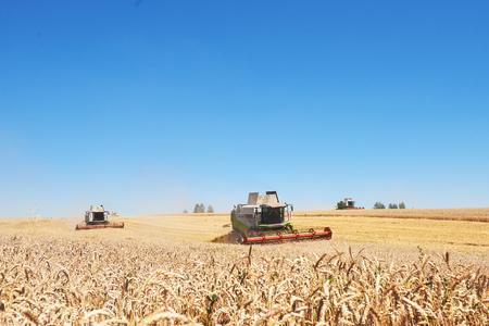 TERNOPIL - 20 luglio: alcuni combina un'andana nel mezzo di un campo di grano durante la vendemmia, il 20 luglio 2017, a Ternopil. Archivio Fotografico - 86464724
