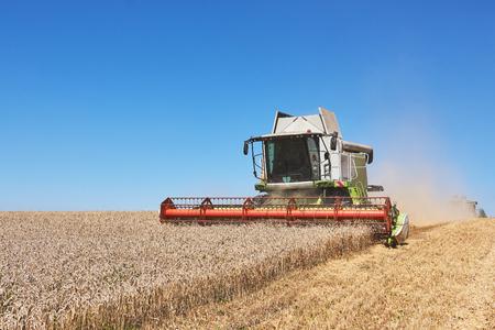Ein moderner Mähdrescher, der ein Weizenfeld bearbeitet Standard-Bild