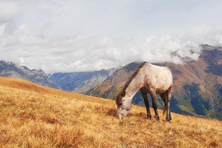 背景の山の牧草地の魅力的なアイスランドの馬 写真素材