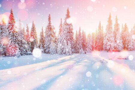 冬の神秘的な冬景色雄大な山々。魔法の冬の雪には、ツリーが覆われています。グリーティング カード。ピンぼけ光効果、ソフト フィルター 写真素材