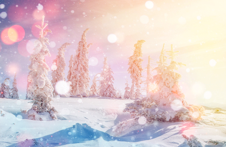 Mysterious winter landscape majestic mountains in winter. Magical winter snow covered tree. Photo greeting card. Bokeh light effect, soft filter