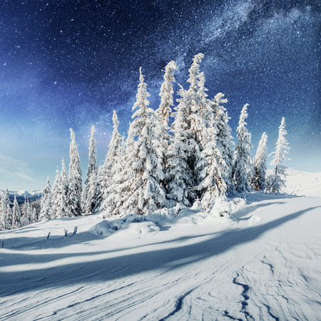 Dairy Star Track in the winter woods. Dramatic and picturesque scene. In anticipation of the holiday. Stock Photo
