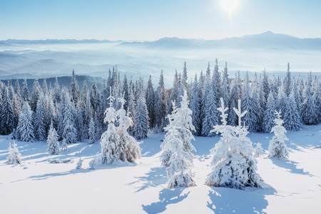 Fantastic winter landscape. Magic sunset in the mountains a frosty day. On the eve of the holiday. The dramatic scene. Carpathian, Ukraine, Europe.