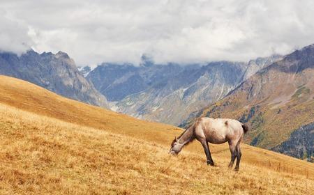 フィールドで歩いている馬 写真素材