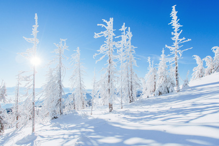Mysterious winter landscape majestic mountains in winter. Magical winter snow covered tree. Dramatic wintry scene. Stock Photo