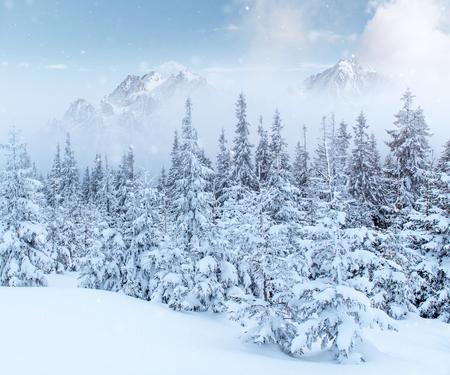 魔法の冬の雪に覆われた木。フォトカード。光効果ボケ、ソフトフィルター。カルパティア。ウクライナ。ヨーロッパ