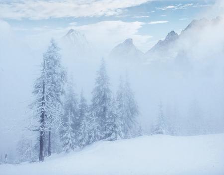 魔法の冬の雪には、ツリーが覆われています。写真のカード。光の効果のボケ味、ソフト フィルター。カルパティア。ウクライナ。ヨーロッパ